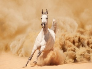 Caballo corriendo sobre la arena