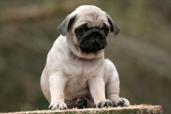 Un perrito tristón