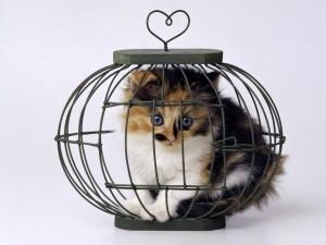 Postal: Gatito dentro de una jaula