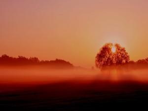Postal: Niebla en el campo al atardecer