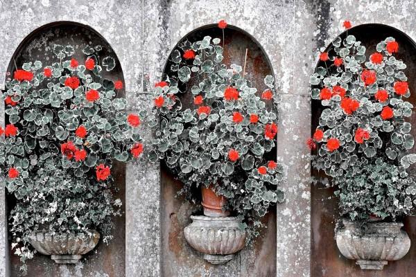 Hermosas flores en la pared