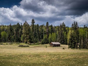 Una solitaria cabaña junto a grandes pinos