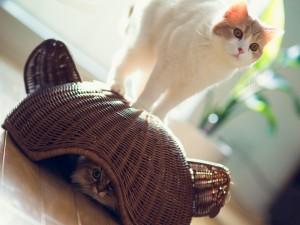 Postal: Gatos jugando al escondite