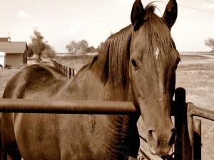 Foto de un caballo marrón