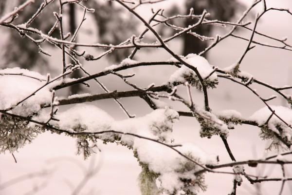 Nieve sobre las ramas desnudas de un árbol