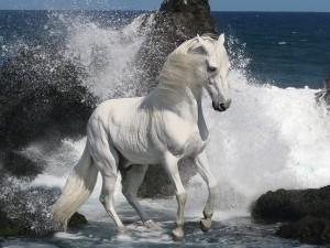 Caballo blanco entre las rocas del mar