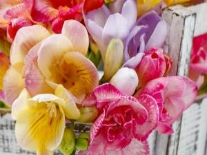 Magníficas flores de varios colores
