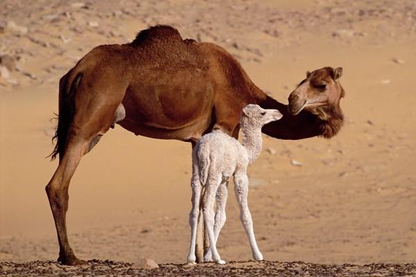 Camella con su cría