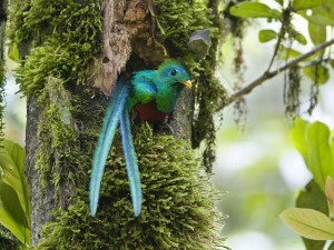 Pájaro de colores en el nido