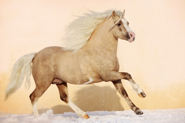 Un bonito caballo trotando sobre la nieve