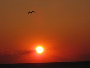 Postal: Gaviota volando al atardecer