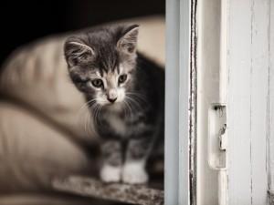 Gatito junto a una puerta