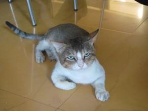 Un gato con cara de enfado