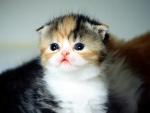 Un gatito con pocas semanas de vida