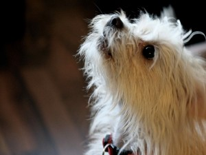 Postal: Un adorable perro