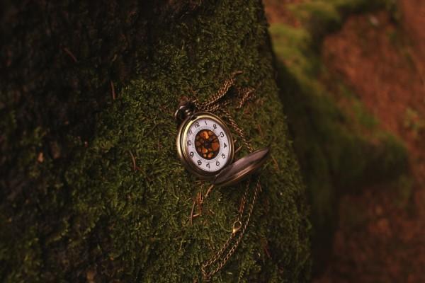 Un bonito reloj perdido en el bosque