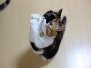 Postal: Gato en una divertida postura