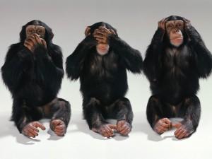 Simpáticos chimpancés