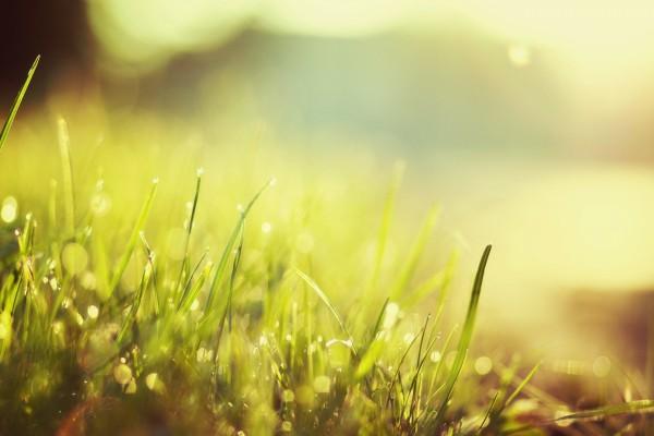 Briznas de hierba iluminadas por el sol