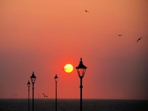 Aves volando sobre el mar al atardecer