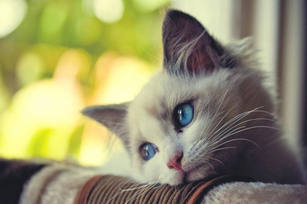 Un bonito y mimoso gato
