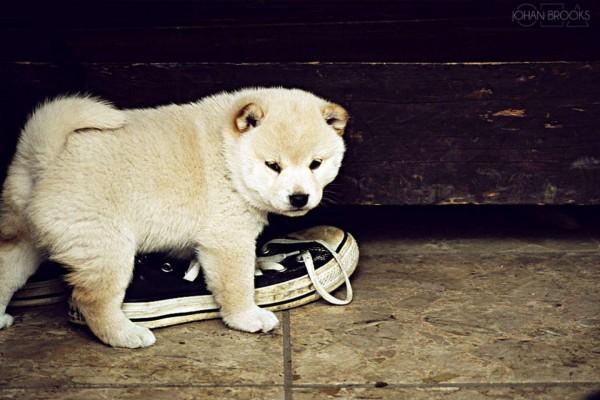 Cachorro jugando con una zapatilla