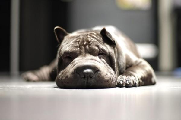 Un perro dormido