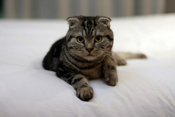Un gato observando desde la cama