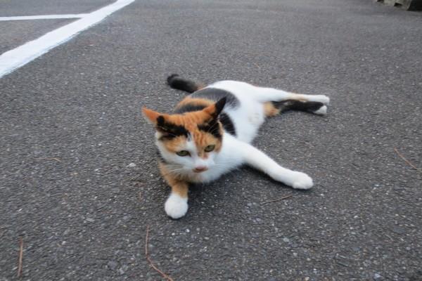 Un gato tumbado en el asfalto