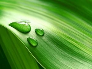 Hoja verde con tres gotas de agua