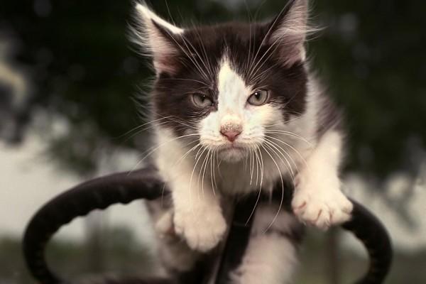 Gato sobre un volante