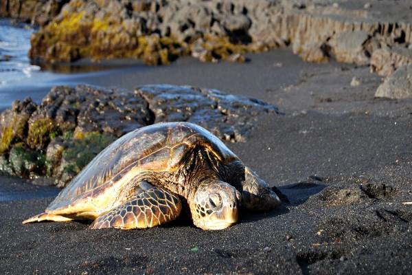 Tortuga marina sobre la arena de una playa