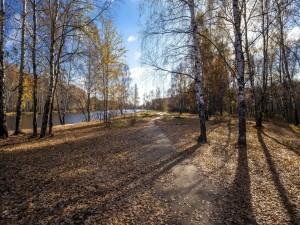 Postal: Árboles perdiendo sus hojas en otoño