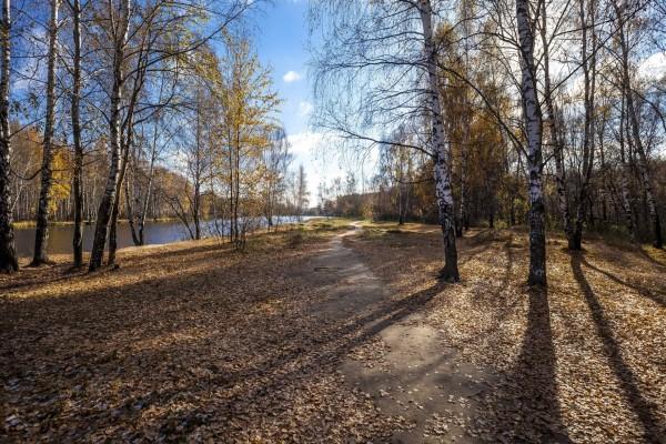 Árboles perdiendo sus hojas en otoño