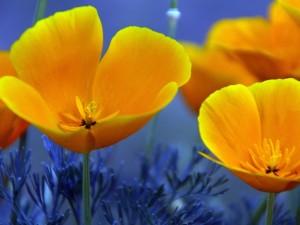 Postal: Flores con bonitos pétalos amarillos