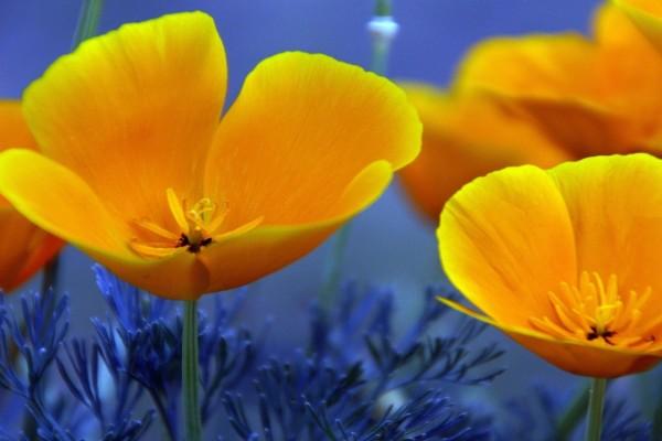 Flores con bonitos pétalos amarillos