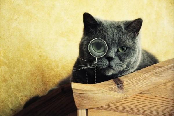 Gato con una lente en el ojo