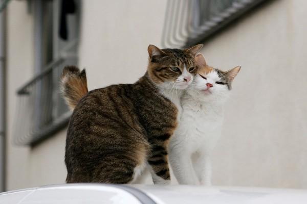 Dos gatos amorosos