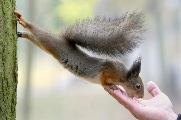 Ardilla estirada hacia una mano que la da de comer