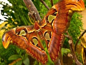 Postal: Una gran mariposa posada sobre la rama de un árbol
