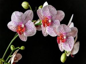 Postal: Un preciosa planta con orquídeas