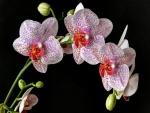 Un preciosa planta con orquídeas