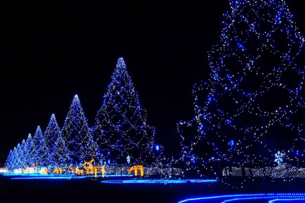 Grandes árboles con luces azules en Navidad
