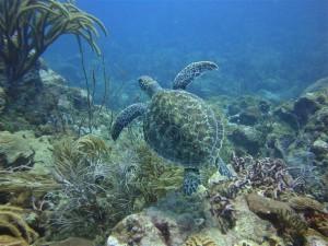 Postal: Tortuga nadando en el fondo del mar