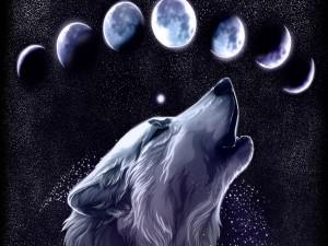 Lobo aullando a las lunas