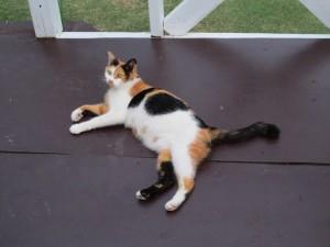 Postal: Un bonito gato tumbado en el porche