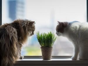 Gatos olisqueando una planta junto a la ventana
