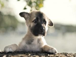 Postal: Un solitario cachorro