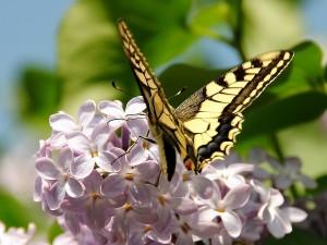 Magnífica mariposa en las flores