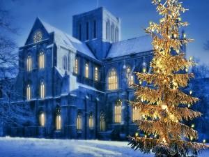 Pino de Navidad iluminado en una noche fría